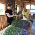 Cousin Rasmus helping put the lavender bunches together for hanging and drying.