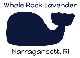 Whale Rock Lavender